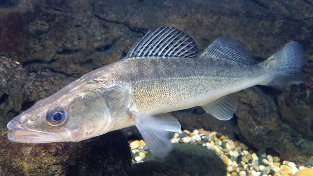 Аган: рыбалка и какая рыба водится