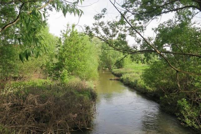 пойма реки Битца