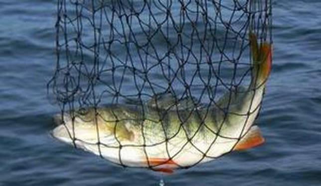Летняя рыбалка близ Дубинино