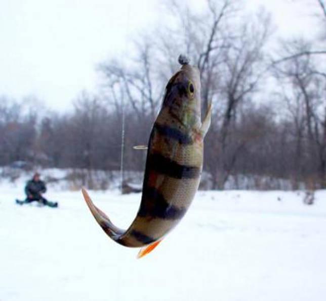 Вазузское водохранилище: рыбалка и какая рыба водится